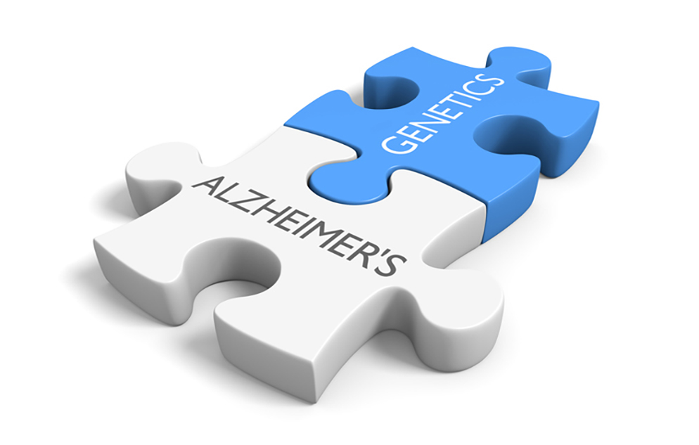 Two connected puzzle pieces with the words Alzheimer's and genetics, symbolizing the link between genes and disease.