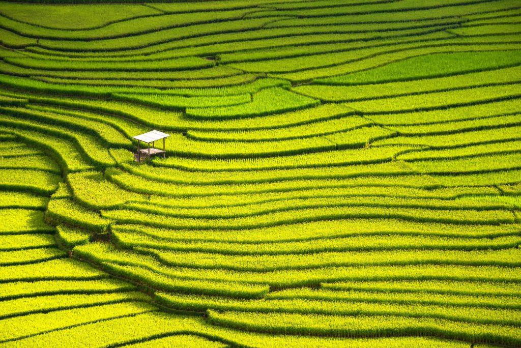 landscape rice terraces